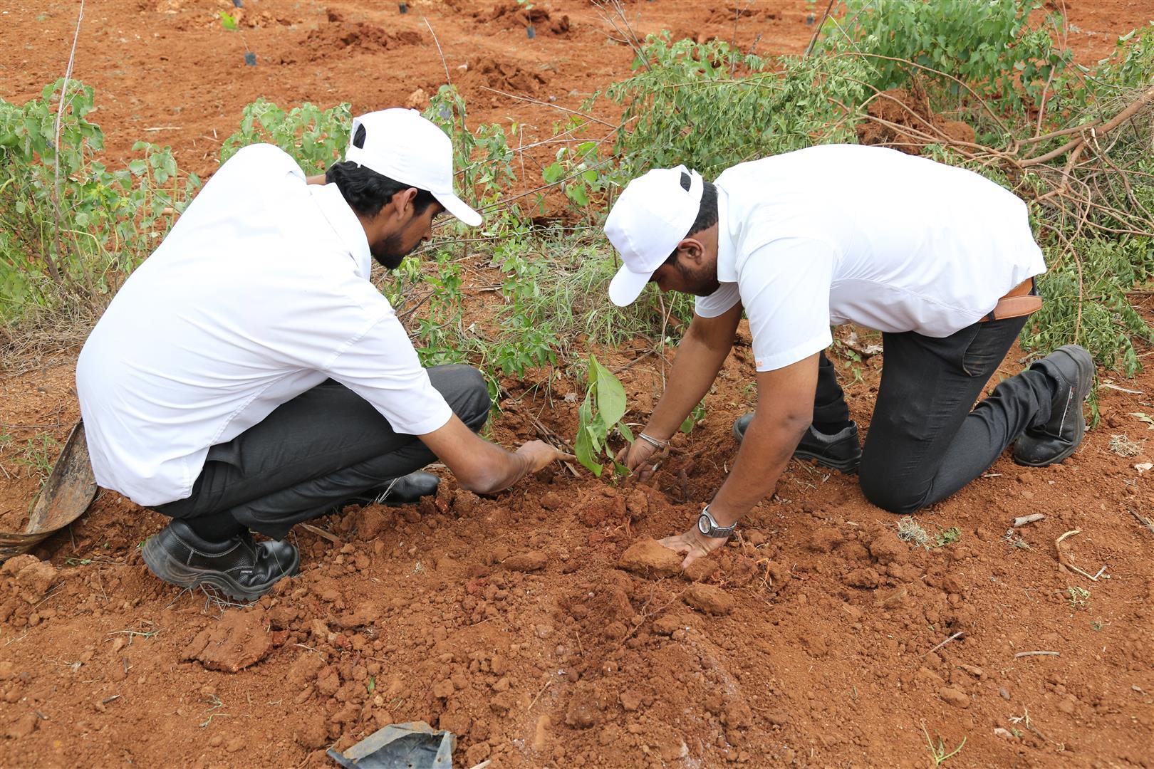 Apollo Tyres to Plant 100000 More Trees in India