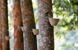 Sumitomo Sets up New Subsidiary for Rubber Procurement